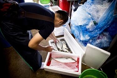 魚仕入の様子